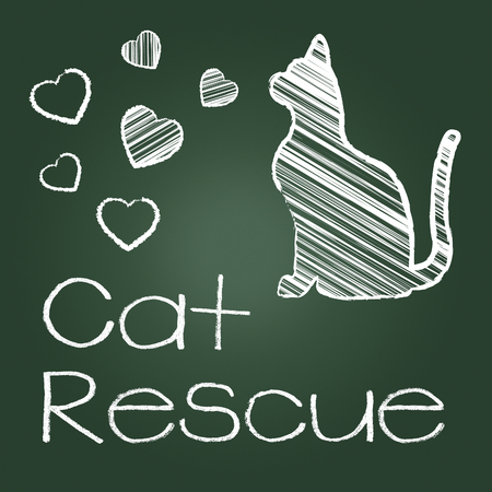 rescuing: Cat Rescue Indicating Recovering Felines And Kittens Stock Photo
