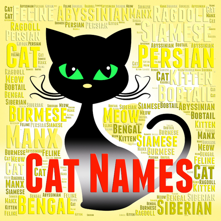 feline: Cat Names Indicating Kitty And Feline Identity Stock Photo