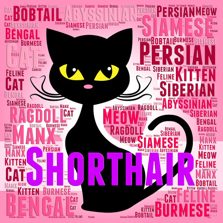 shorthair: Shorthair Cat Meaning Feline Pet And Offspring