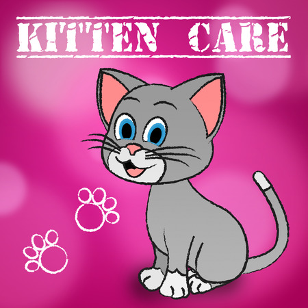 look after: Kitten Care Representing Look After And Caring For Cats
