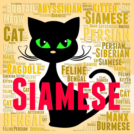 reproducing: Siamese Cat Meaning Reproducing Offspring And Domestic
