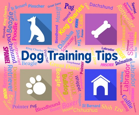 canines: Dog Training Tips Showing Purebred Instructing And Canines