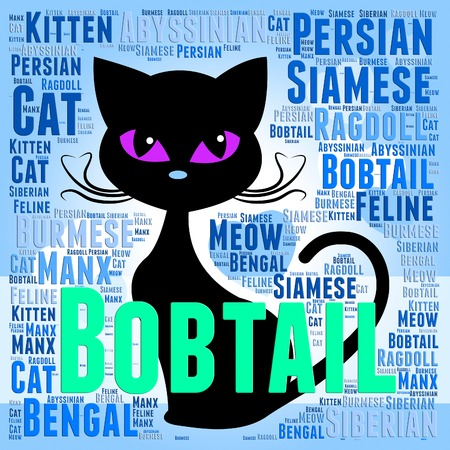 bobtail: Bobtail Cat Showing Breeds Reproducing And Tails