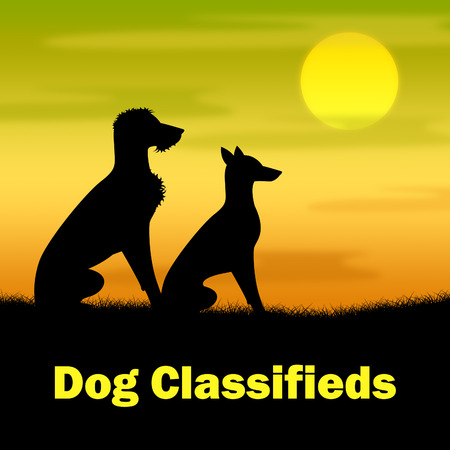 evening newspaper: Dog Classifieds Meaning Evening Newspaper And Pasture