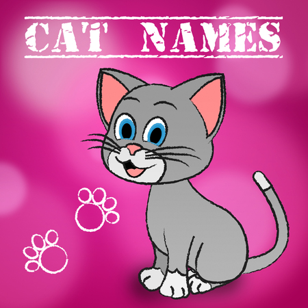 puss: Cat Names Meaning Pet Puss And Pedigree Stock Photo