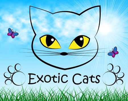 exotic pet: Exotic Cats Meaning Kitty Special And Pet