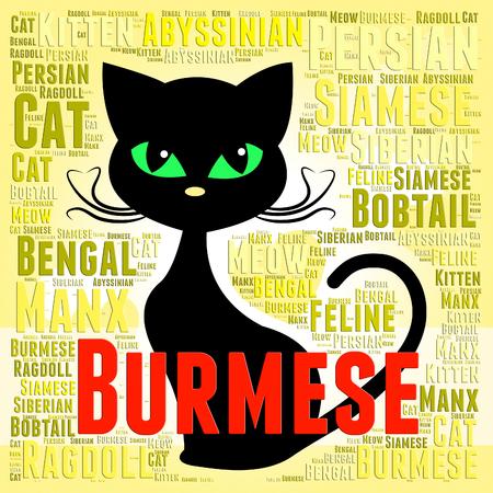 pedigreed: Burmese Cat Indicating Felines Offspring And Pedigreed