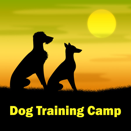 taught: Dog Training Camp Indicating Trainer Coach And Dogs