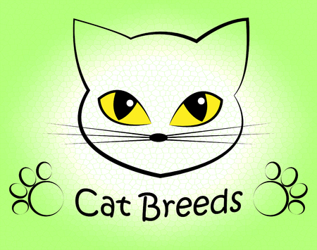 bred: Cat Breeds Representing Felines Reproduce And Pet Stock Photo