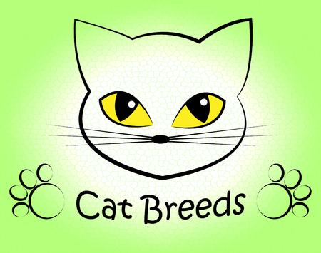 reproduce: Cat Breeds Representing Felines Reproduce And Pet Stock Photo