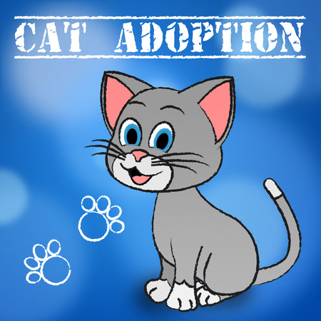 feline: Cat Adoption Showing Feline Adopted And Pets