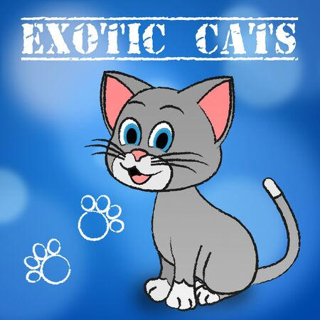 puss: Exotic Cats Meaning Feline Pets And Puss