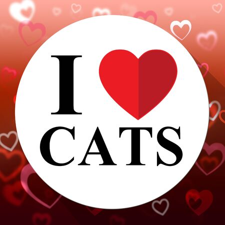 agreeable: Love Cats Showing Kitty Superb And Agreeable Cat