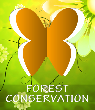 Forest Conservation Butterfly Cutout Shows Preservation 3d Illustration