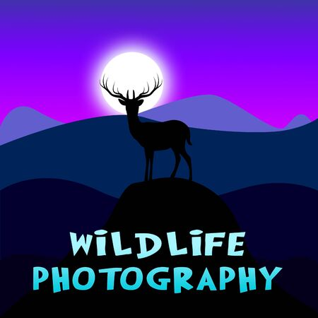 wildlife shooting: Wildlife Photography Mountain Scene Shows Animal Photos 3d Illustration