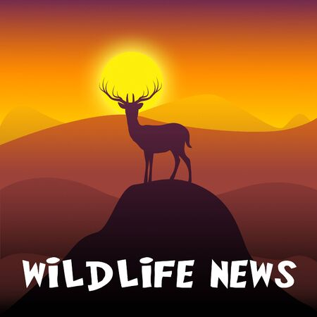 Wildlife News Mountain Scene Shows Outdoors Media 3d Illustration