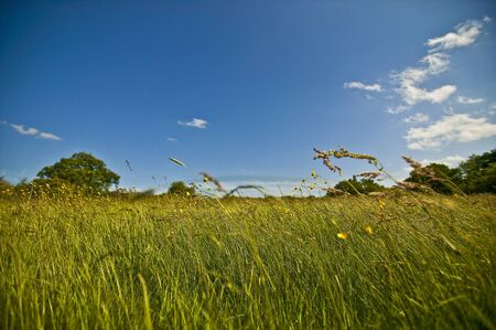 Meadow Grasses Blowing in the Wind photo