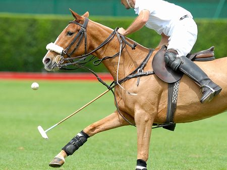 polo sport: Action polo match, one player. Stock Photo