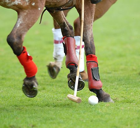 Polo, pony, mallet and ball.