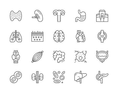 Conjunto de iconos de línea de órganos internos humanos. Glándula tiroides, bazo, útero, estómago, pulmones, cerebro, corazón y más. Paquete de iconos de 48x48 píxeles Ilustración de vector