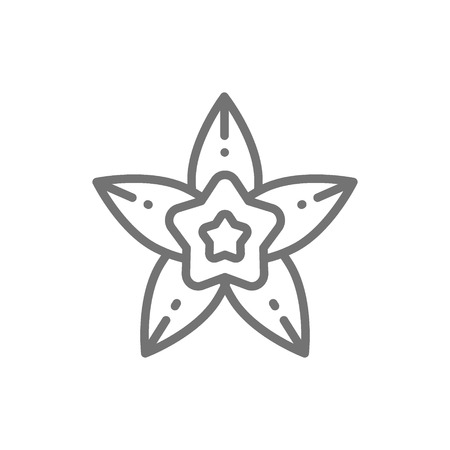 Vanilla, star anise line icon. Isolated on white background  イラスト・ベクター素材