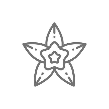 Vanille, Sternanis Liniensymbol. Isoliert auf weißem Hintergrund Vektorgrafik