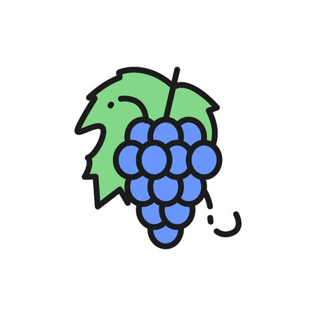 Vector bunch of grapes, fruit flat color line icon.