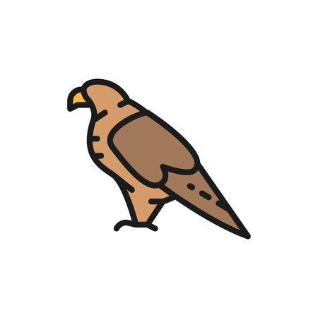 Vector eagle, falcon, georgian national bird flat color line icon. Symbol and sign illustration design. Isolated on white background
