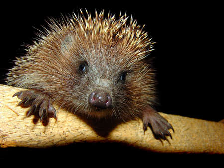 The foto of the pretty hedgehog. flash photo