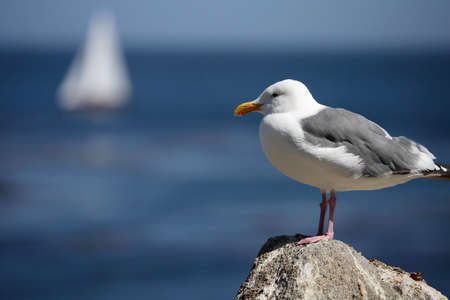 marina life: Seagull Stock Photo