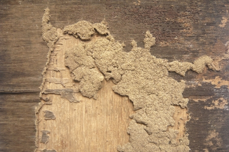 termite track on wooden wall