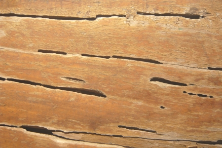 damage control:  termite track on wooden wall
