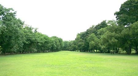 緑の芝生と、公園の木