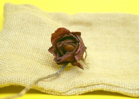 dead rose on burlap Stock Photo - 21564407