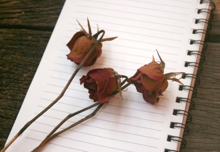 dried roses on the blank book photo