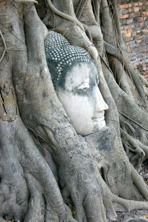 preferable: Buddhas head is embedded in tree roots Stock Photo
