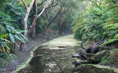 backwaters: jungle and backwaters Stock Photo