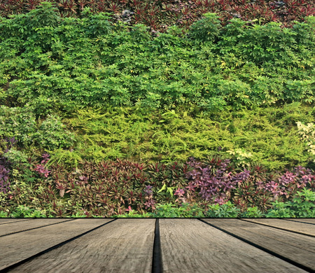 flower and plant wall vertical garden Standard-Bild