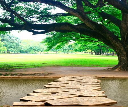 公園内の大きな木 写真素材