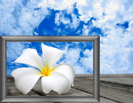 white frangipani in frame and blue sky  photo