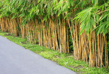 Red And Green Colour Wall With Bamboo Trees Stock Photo, Picture And ...