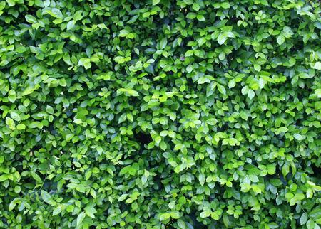 plant background photo