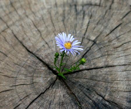 flower born on the stump Standard-Bild