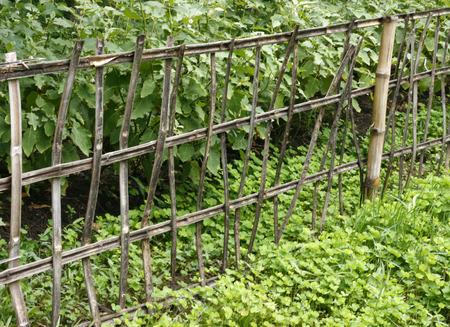 slings: Old bamboo fence Slings with green plants Stock Photo