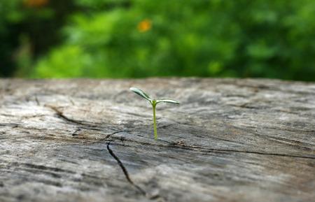 plant born on the stump Standard-Bild
