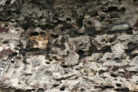 drywood: Traces of termites on old wood