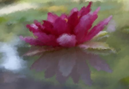 Oil painting pink waterlily or lotus flower in pond photo