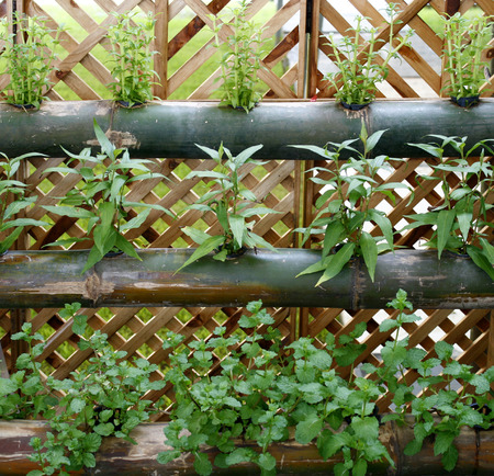 野菜垂直庭園