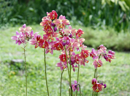 mix of beautiful orchids  photo