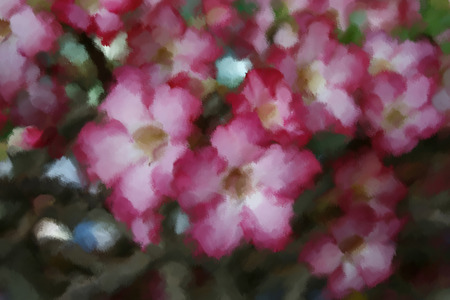 Oils painting Desert rose, Impala Lily, Azalea for texture photo